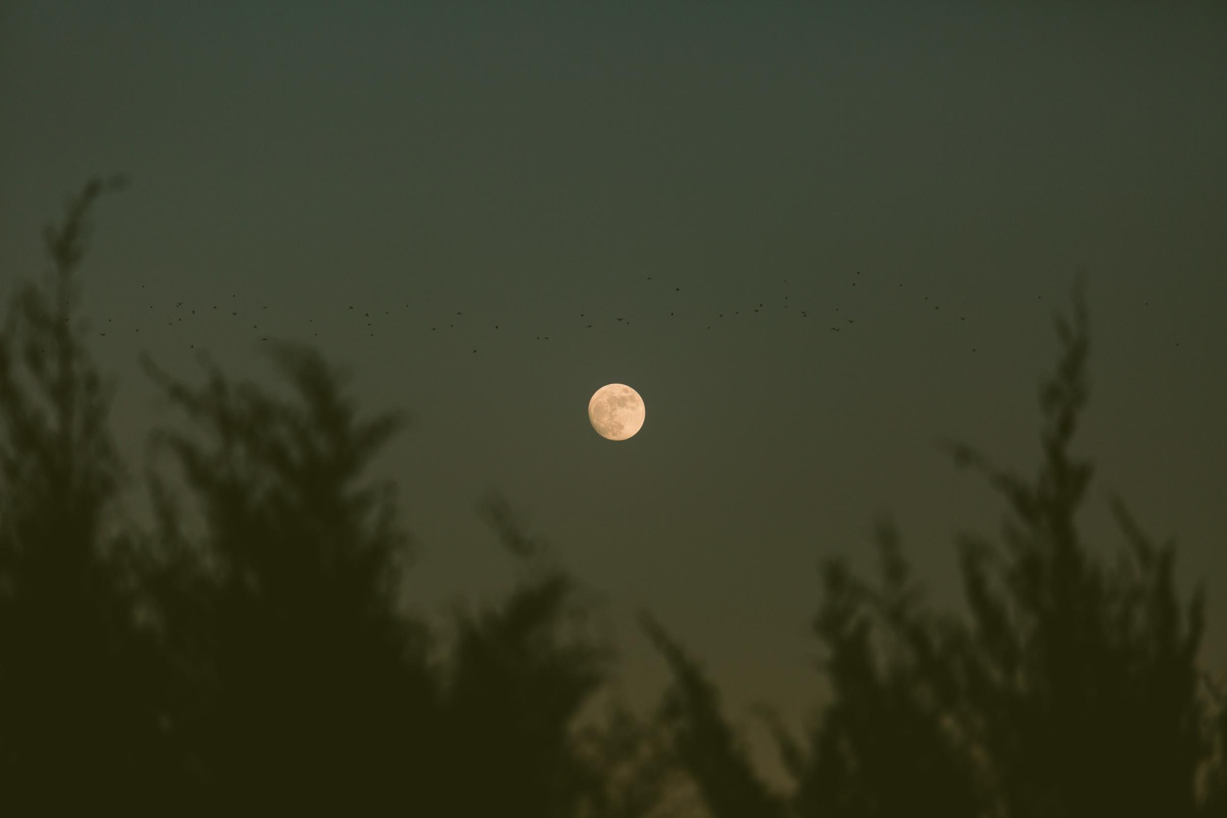 moonpost-3.jpg