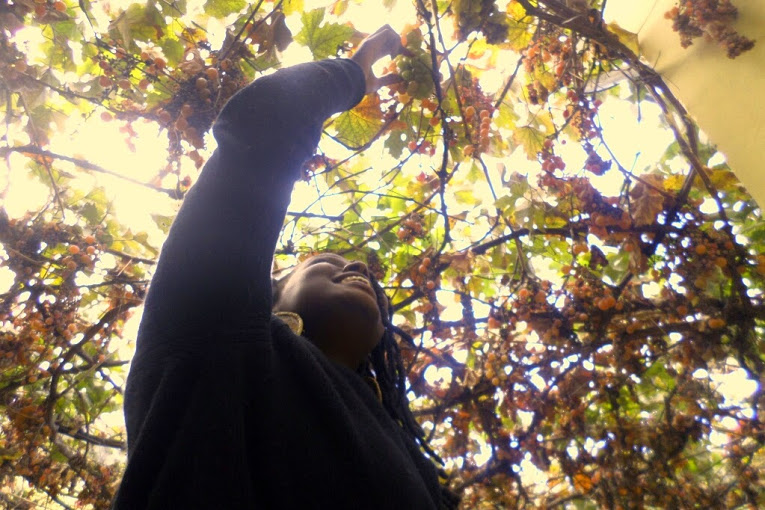 """Picking grapes off the """"roof"""" at the hostel patio"""