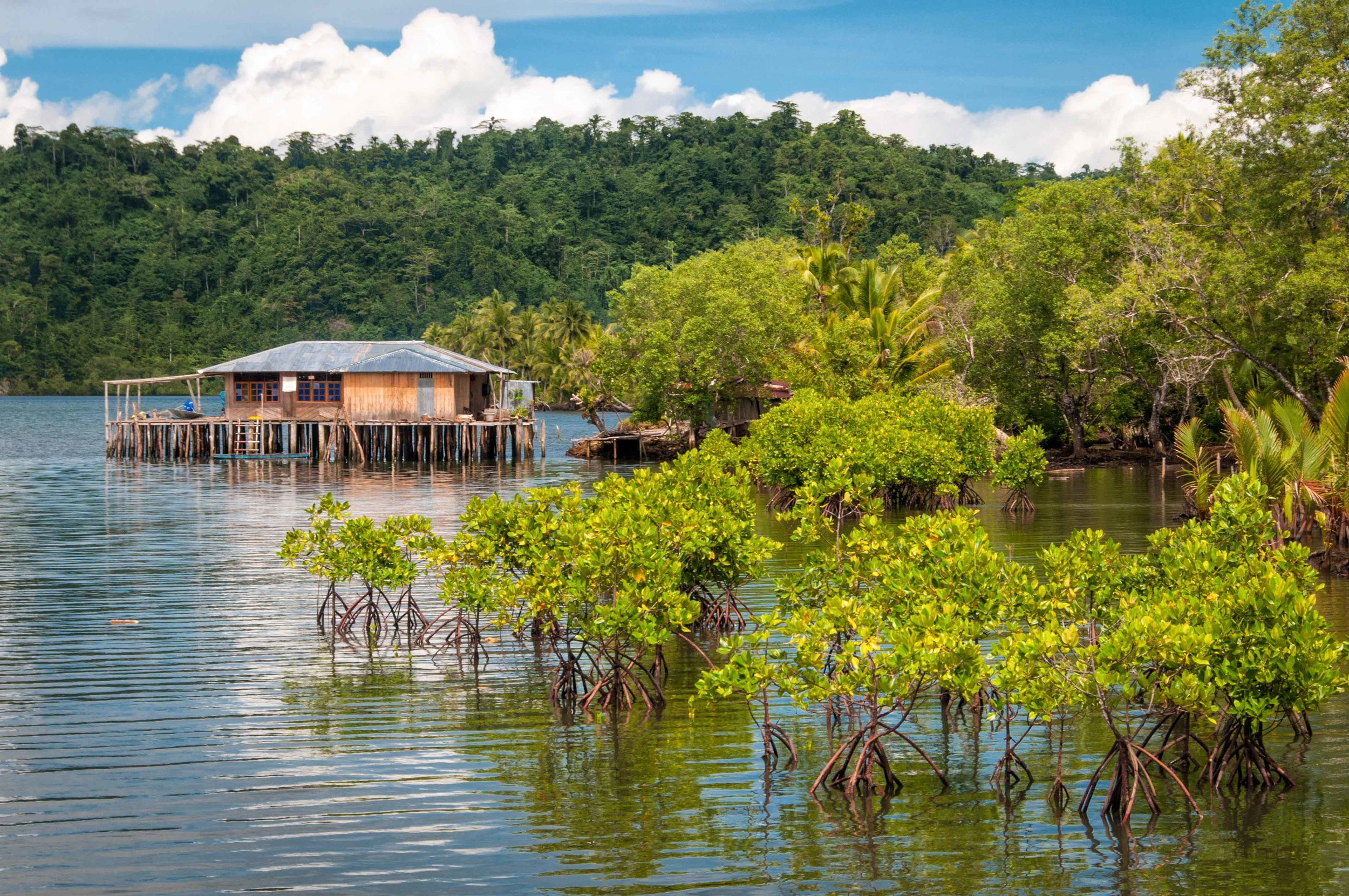 The benefits of the Mangroves:    Traditional medicine   Hunted food   Firewood and building materials   Barrier against erosion from waves, cyclones and tsunamis   Process sewage to protect human health   Filter sediment that threatens health and productivity of coral reefs and seagrass meadows