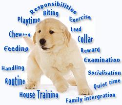 puppy-training01.jpg