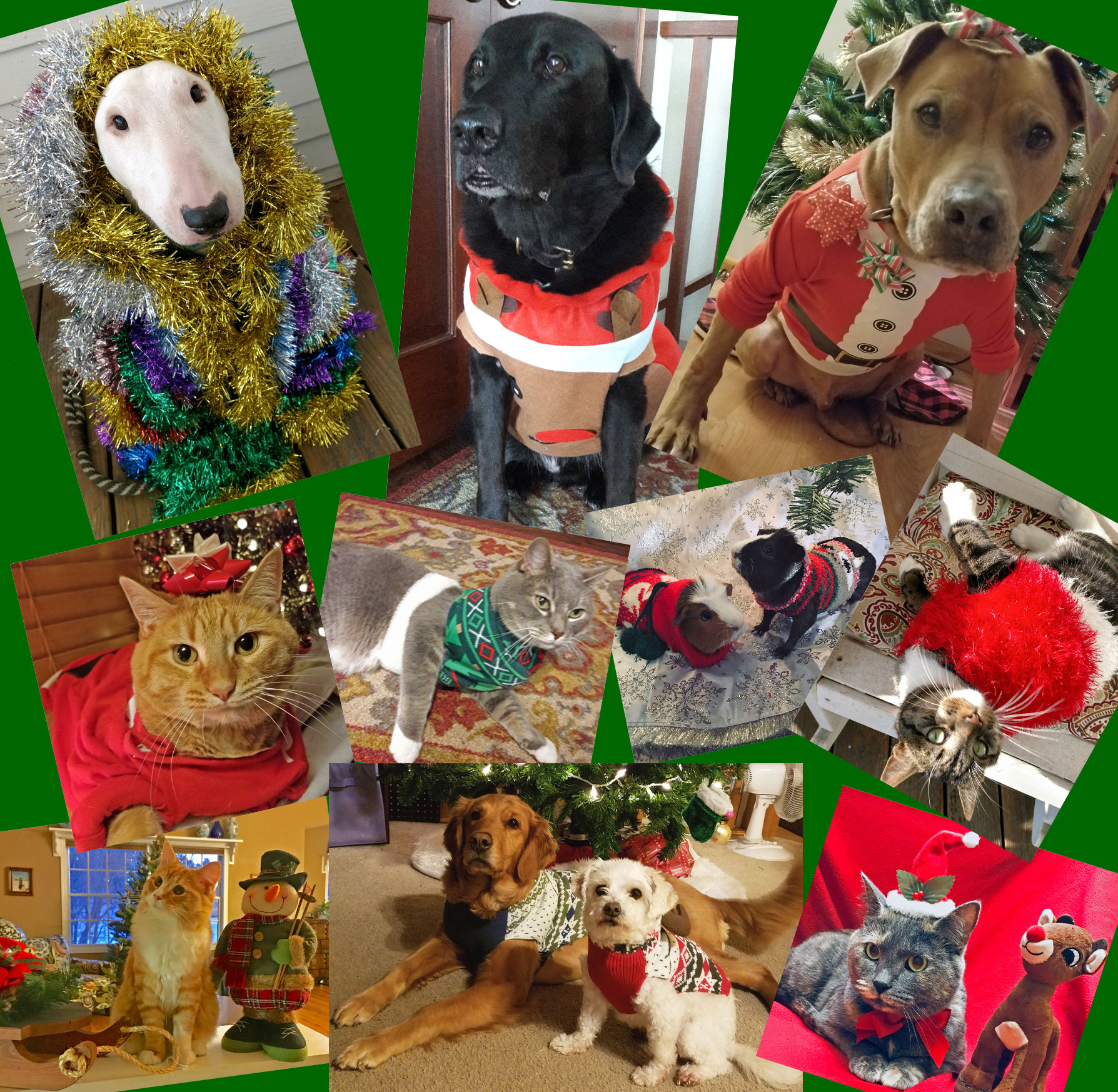 Christmas-collage-2-2018 2.jpg