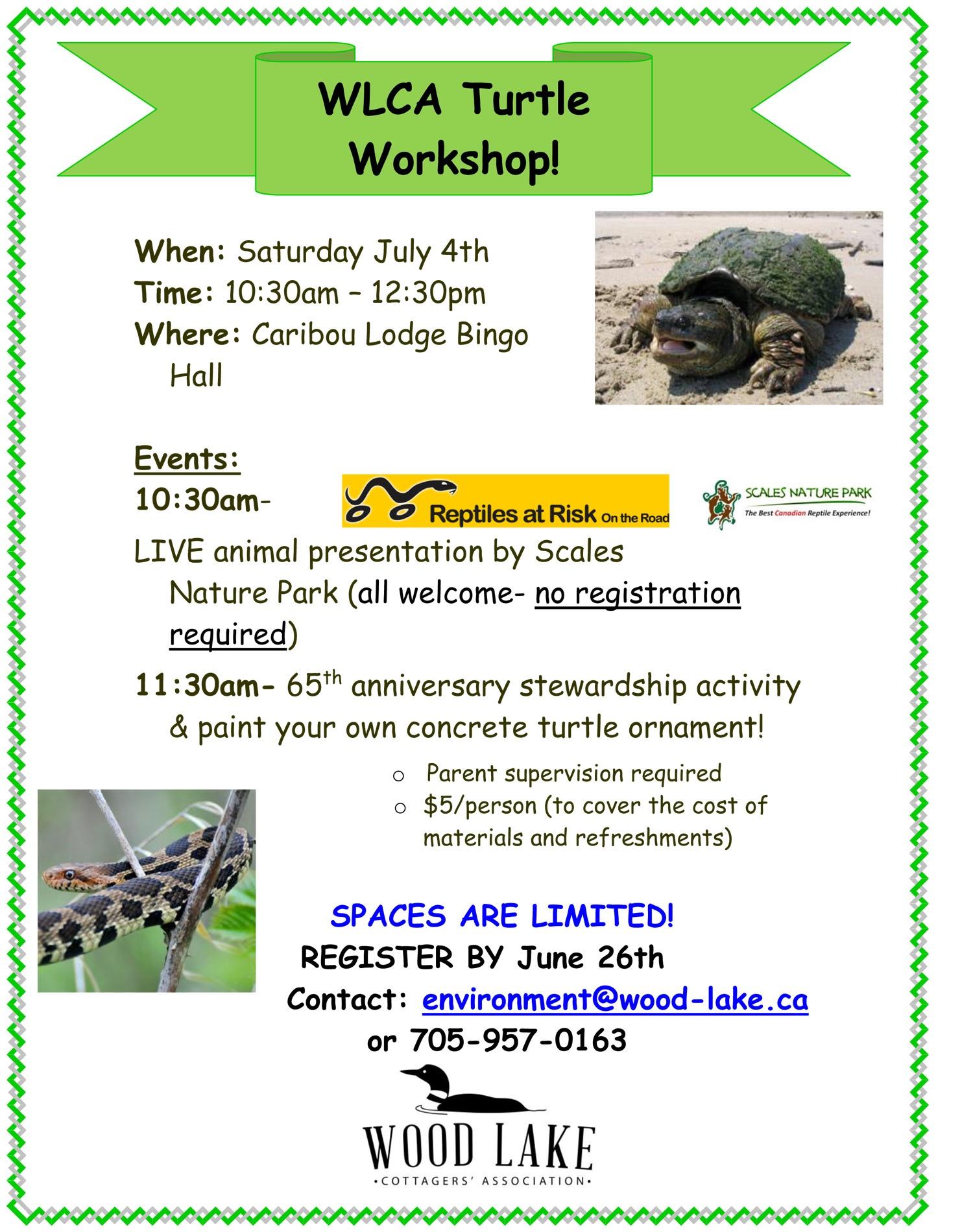 2015 Turtle Workshop.jpg