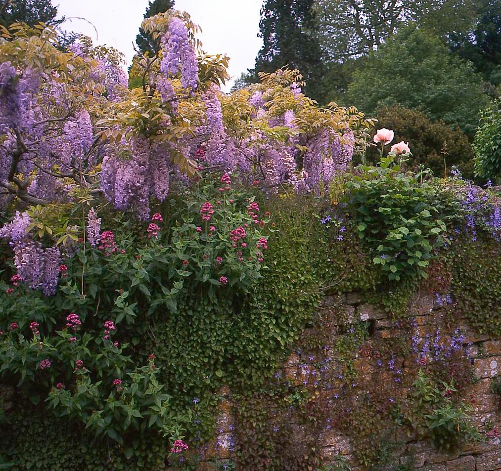 garden wall Ifoird (1 of 1).jpg
