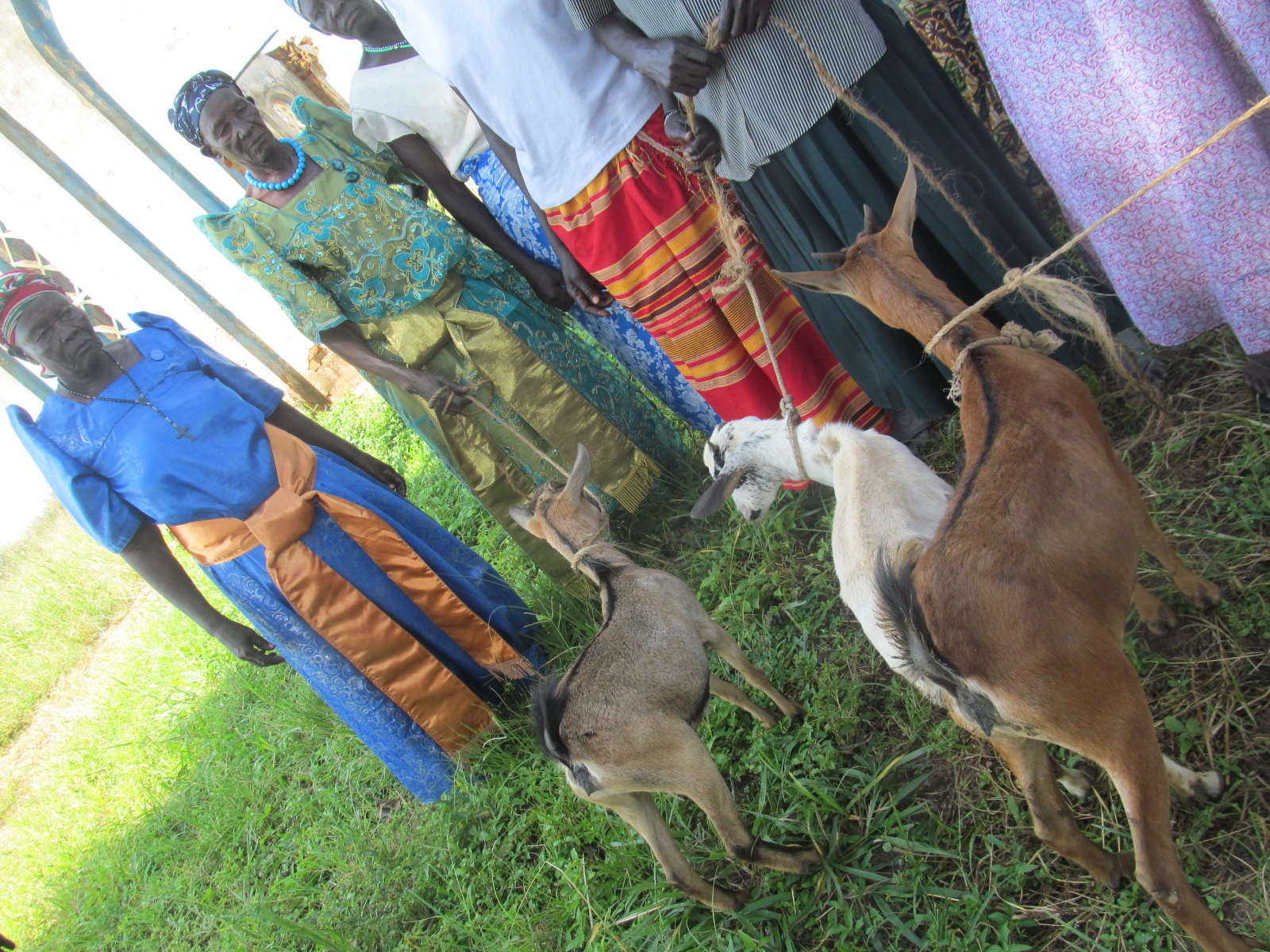 10 goats were gifted to the Village of Paicho, a special Christmas for the families who received them!