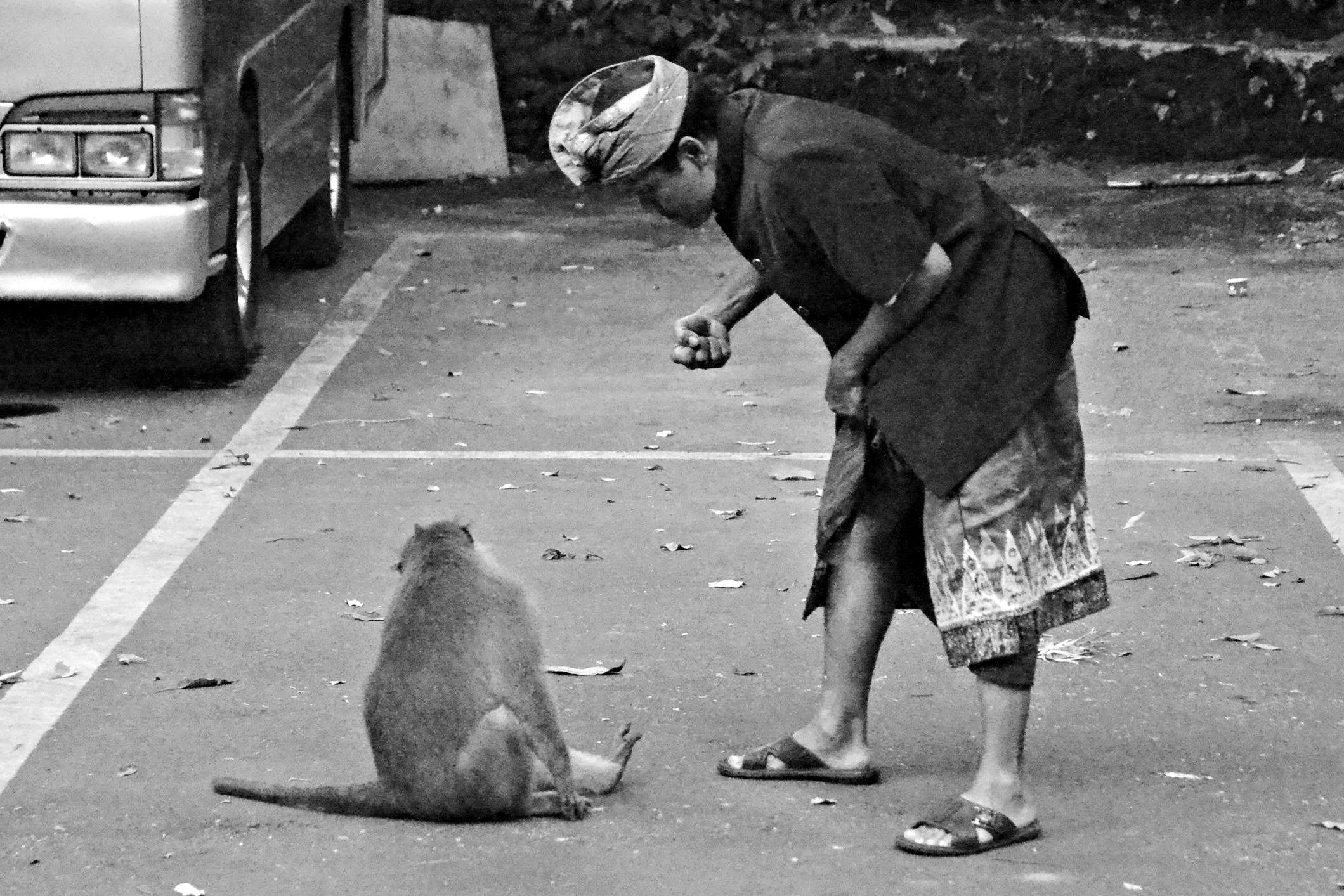 Punch the Monkey Tonight