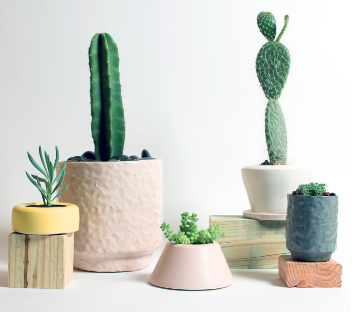 Planters by Felt and Fat / Cactus by Shop.Field