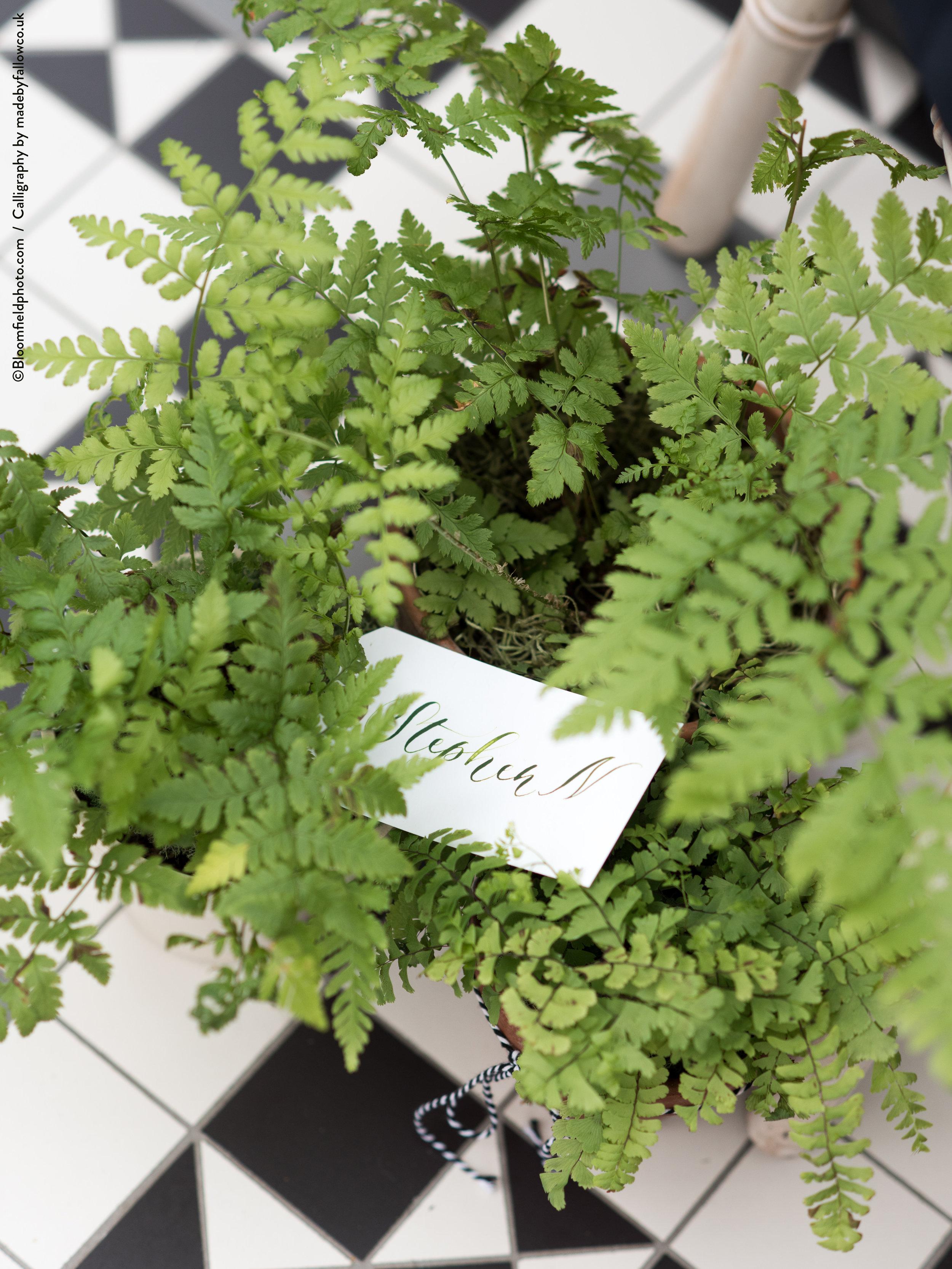 fallow-calligraphy-place-card-greenery.jpg