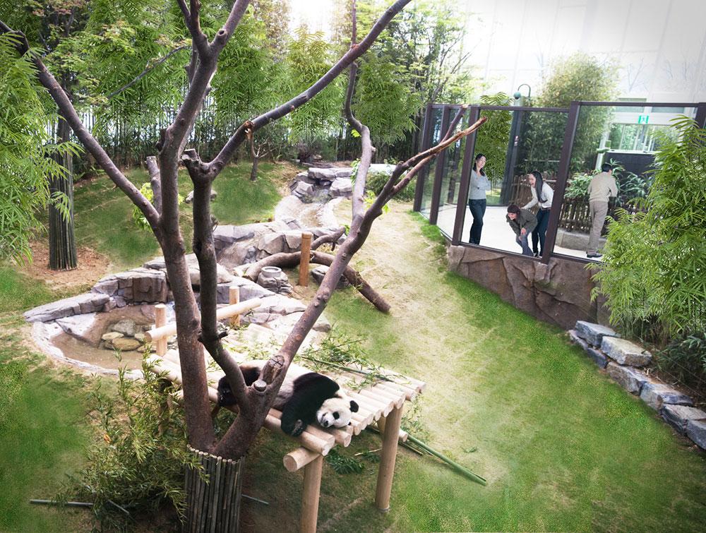 panda_landscape_frank_dan_pearlman_1.jpg