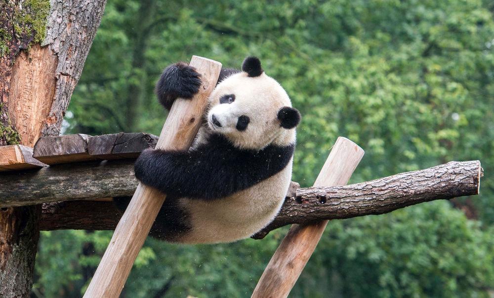 mengmeng_panda.jpg