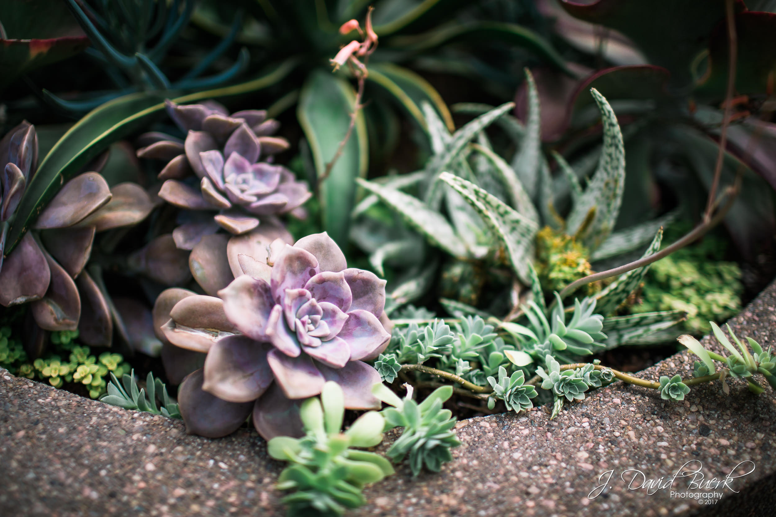 Succulents growing in a flowerpot in Washington, DC.
