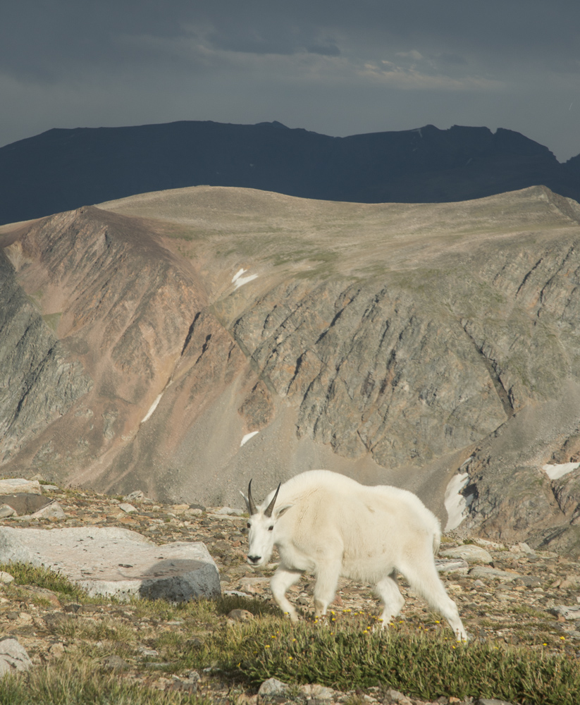 The welcoming committee back at high camp