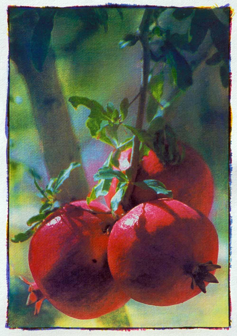 Tri-color gum bichromate by Adrian Elwell:  Pomegranates