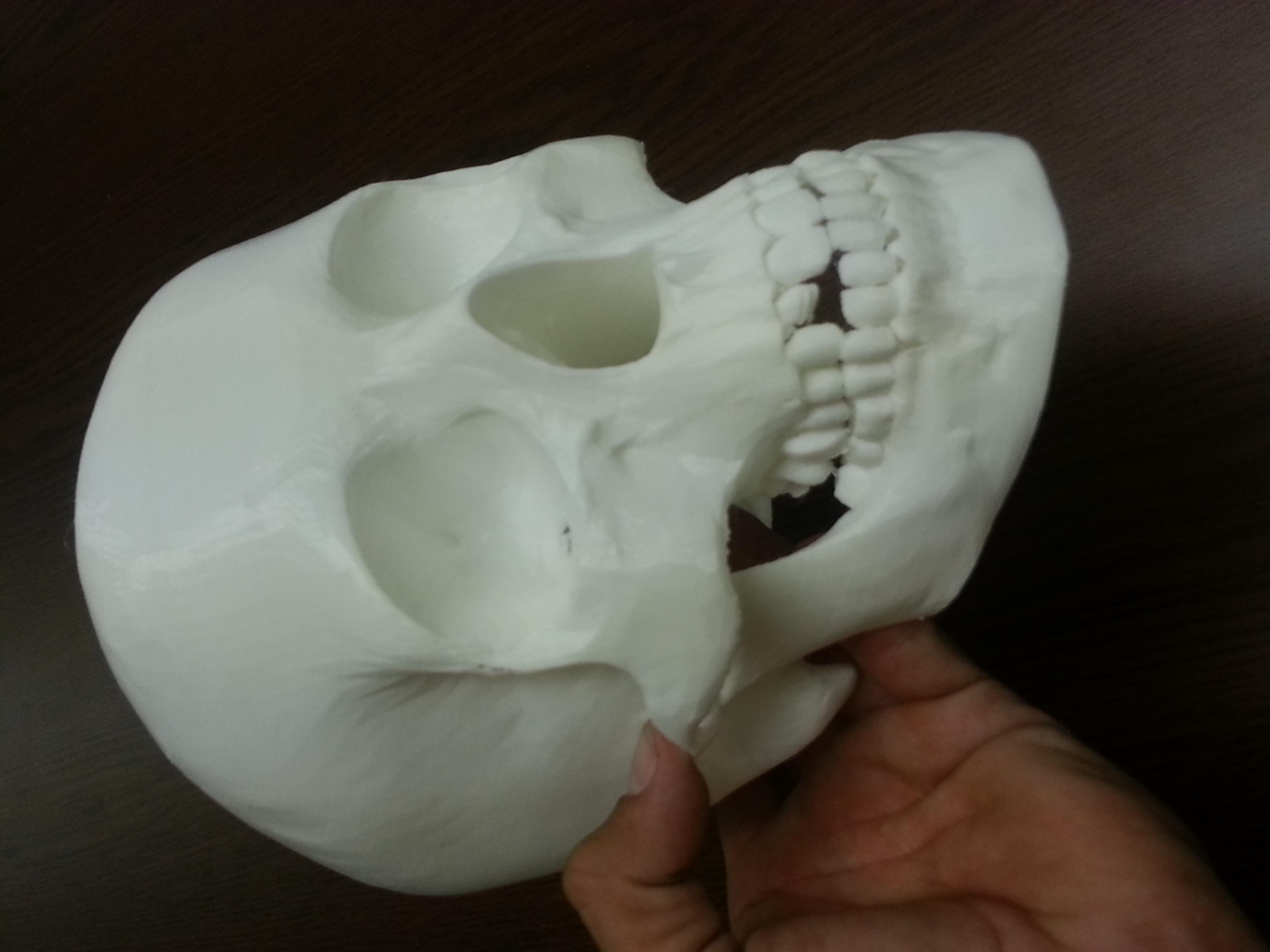 "Human Skull (8"" x 10"")"