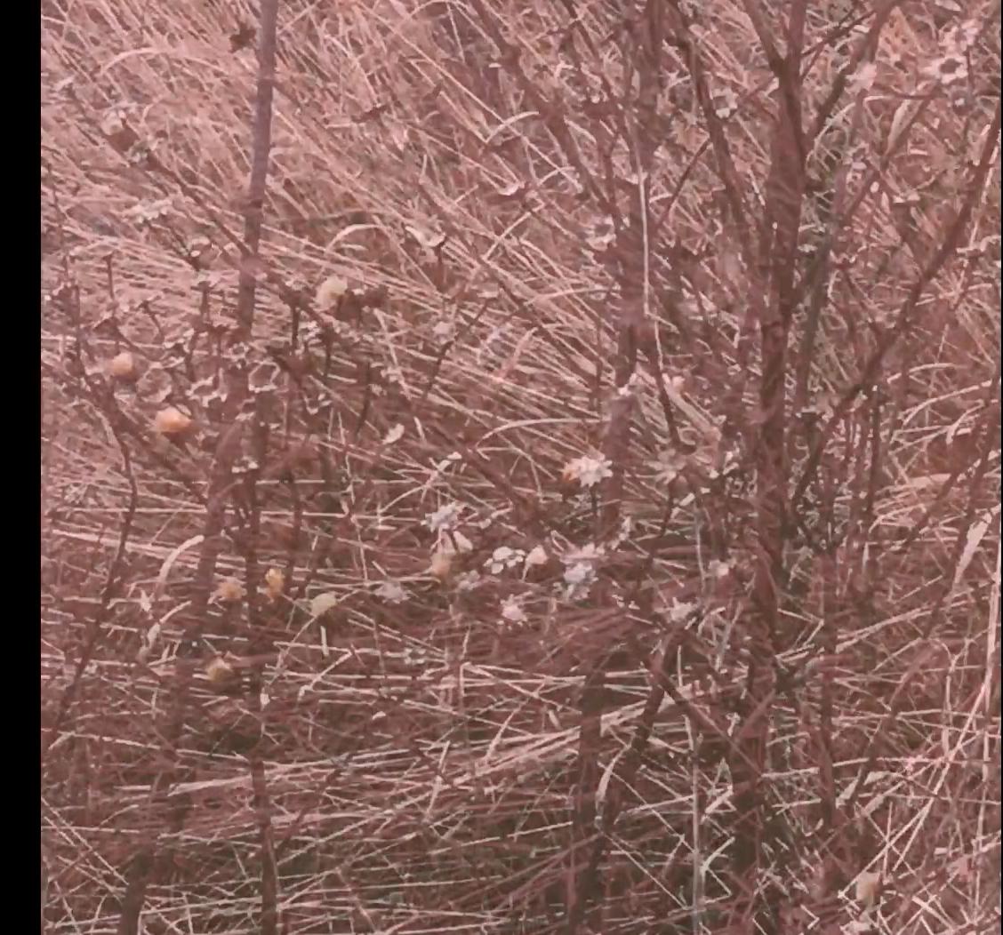 Screen Shot 2019-02-26 at 2.58.30 PM.png
