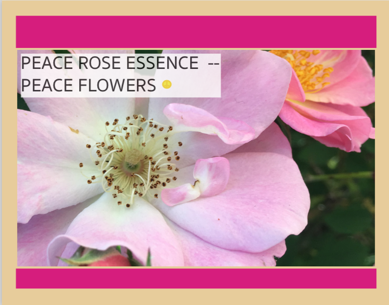 PEACE FLOWERS - Coming soon . . . PEACE FLOWERS flower essences for subtle body healing.