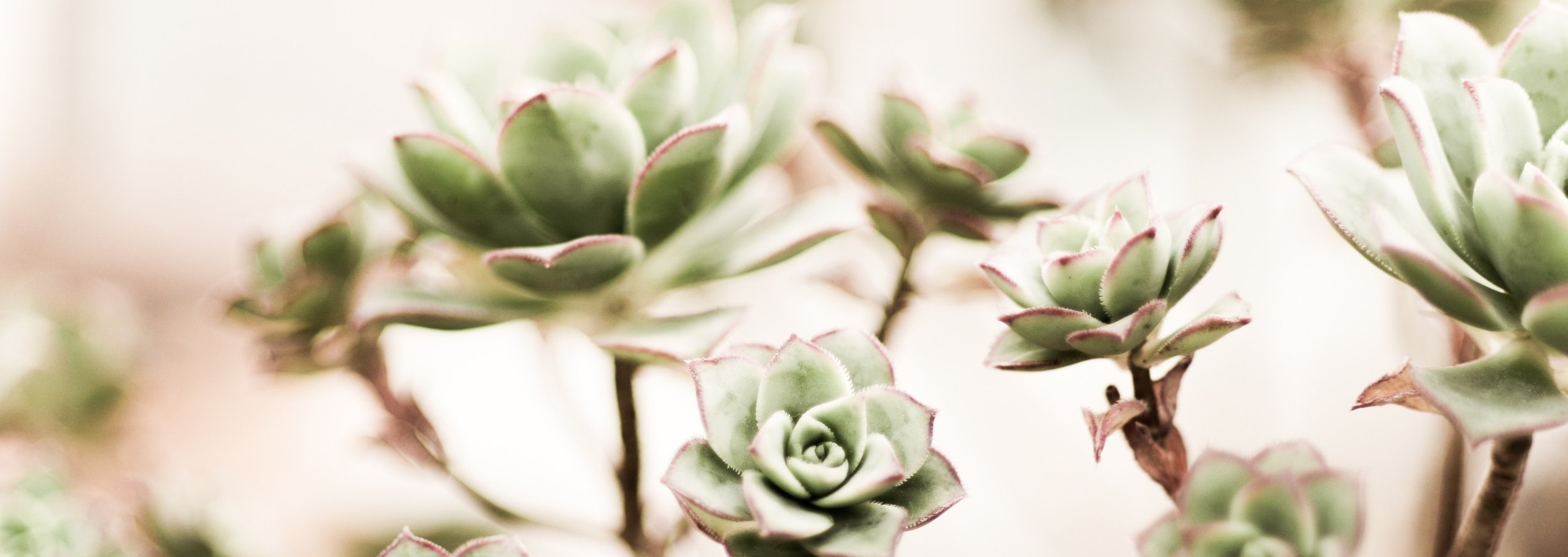 light green succulent.jpg