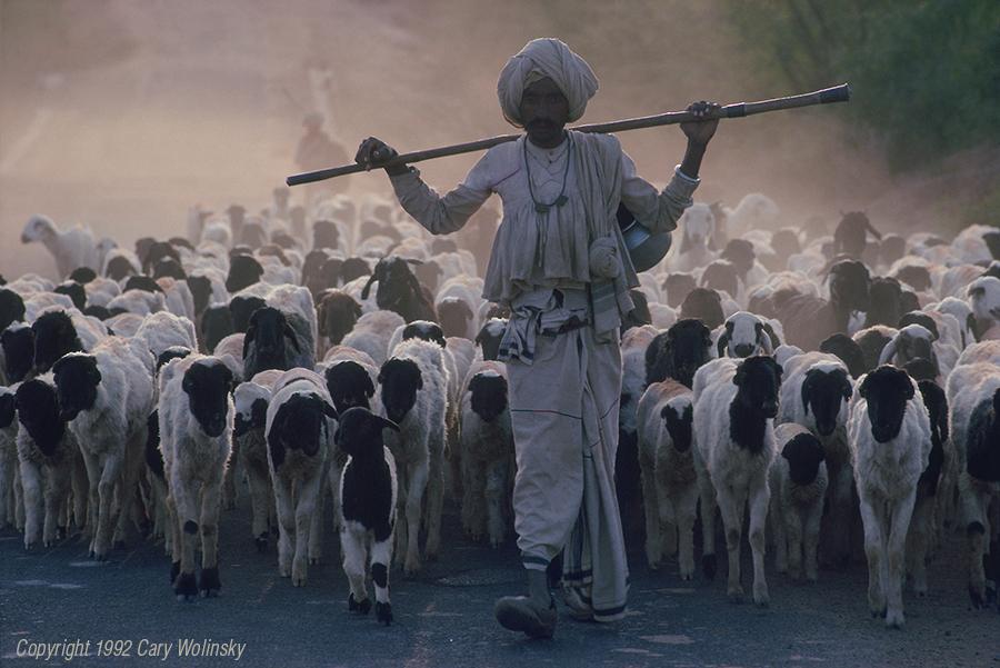 Robari Goatherd