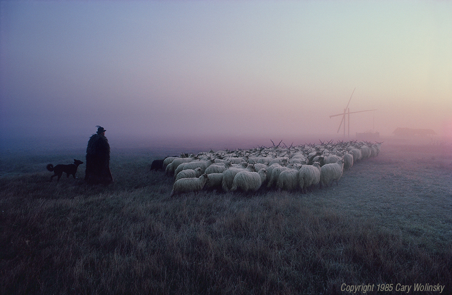 Racka Flock