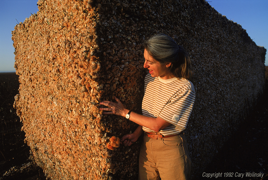 Cotton breeder Sally Fox examines a module of freshly picked natural brown cotton. She is wearing a shirt and pants made from this cotton.