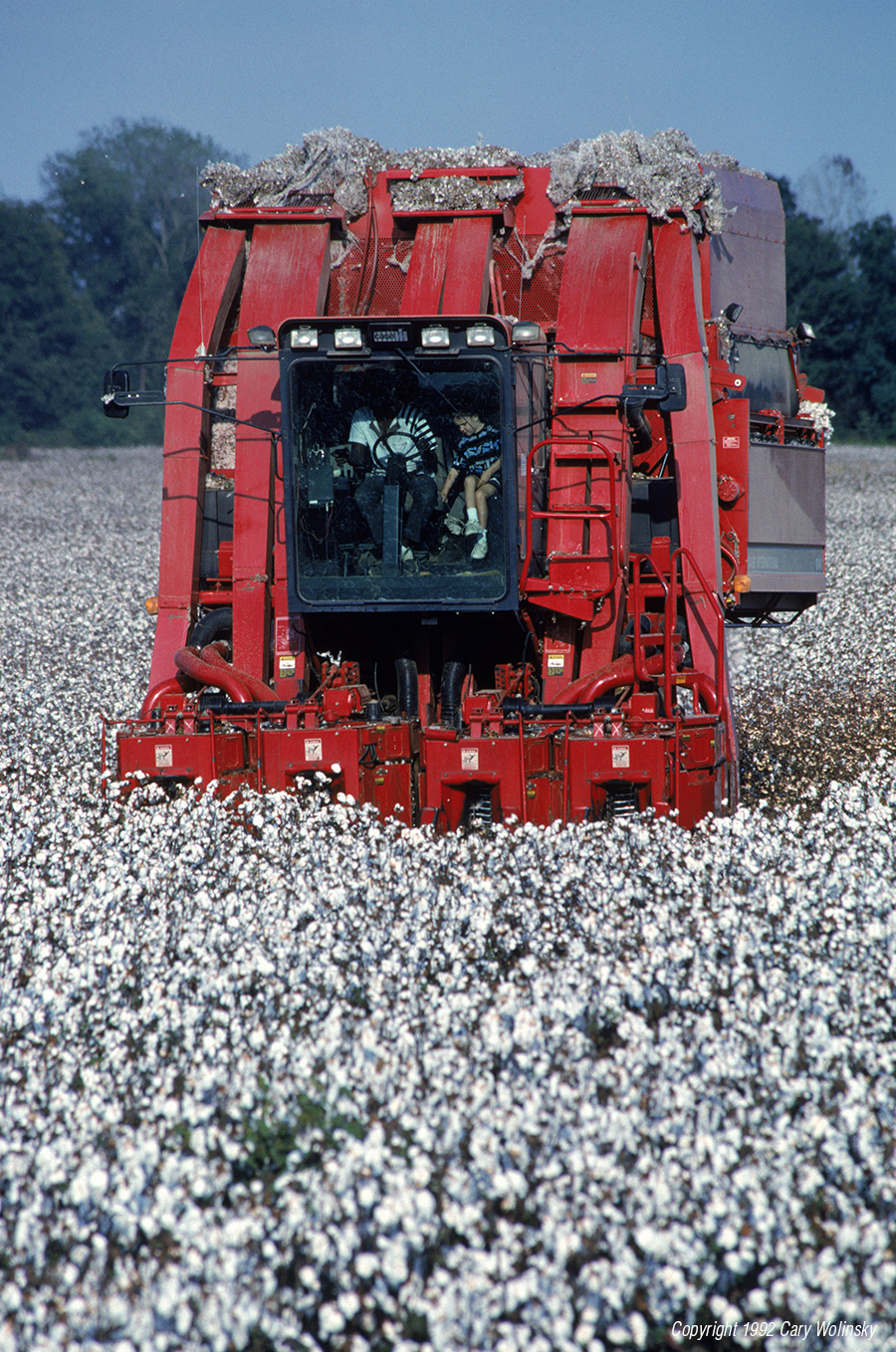 In a field of mature cotton, a four-row harvester removes the bolls. Greenwood, Mississippi.