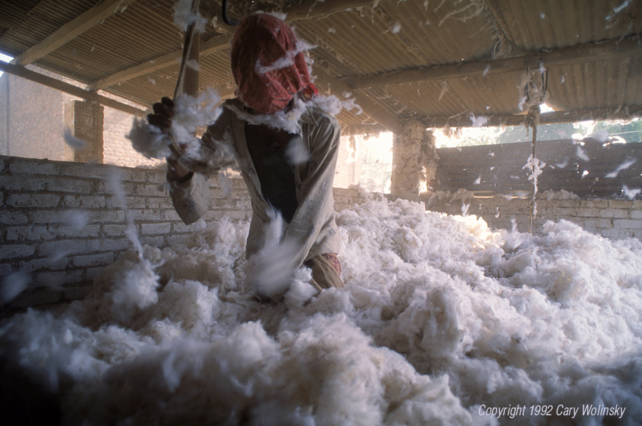 A worker at the Bavala Ginning Factory in Ahmedabad, India stands facing the cotton as it blows out of the gin, his head covered to protect his lungs from the lint.