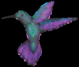 elemental+hummingbird+only+©+elemental.png