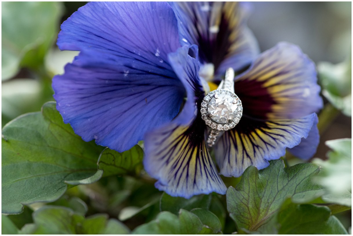 Lititz PA ring detail on a pansy during engagement session Lancaster Wedding photo