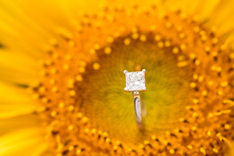 Romantic engagement session in sunflower field lancaster pa wedding photographer photo_0011.jpg