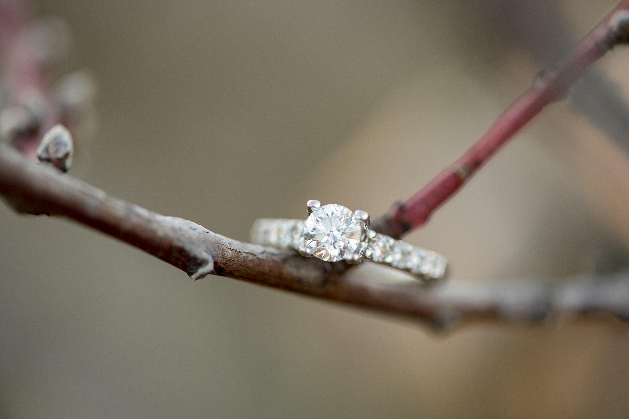 New Providence orchard Lancaster County Wedding and engagement photographer photo_0952.jpg