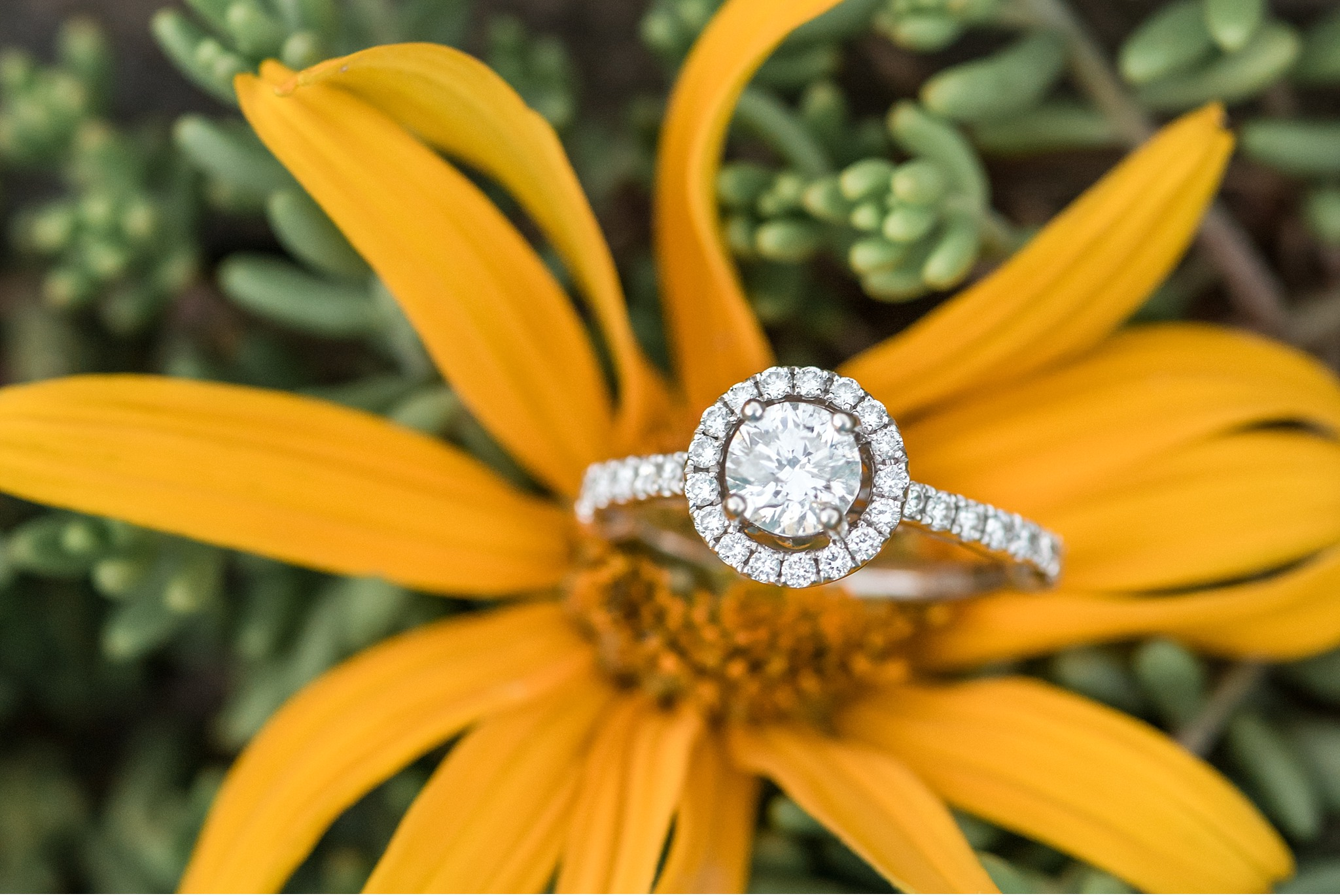 Diamond Ring Details Grings Mill Berks County Light and Airy engagement session at golden sun Wedding Photography photo_1817.jpg