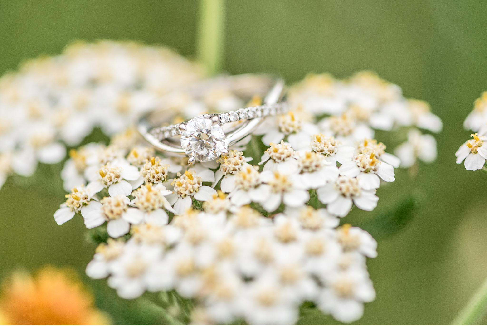 Chiques Park Marietta PA Lancaster Wedding Engagement Photographer_3665.jpg