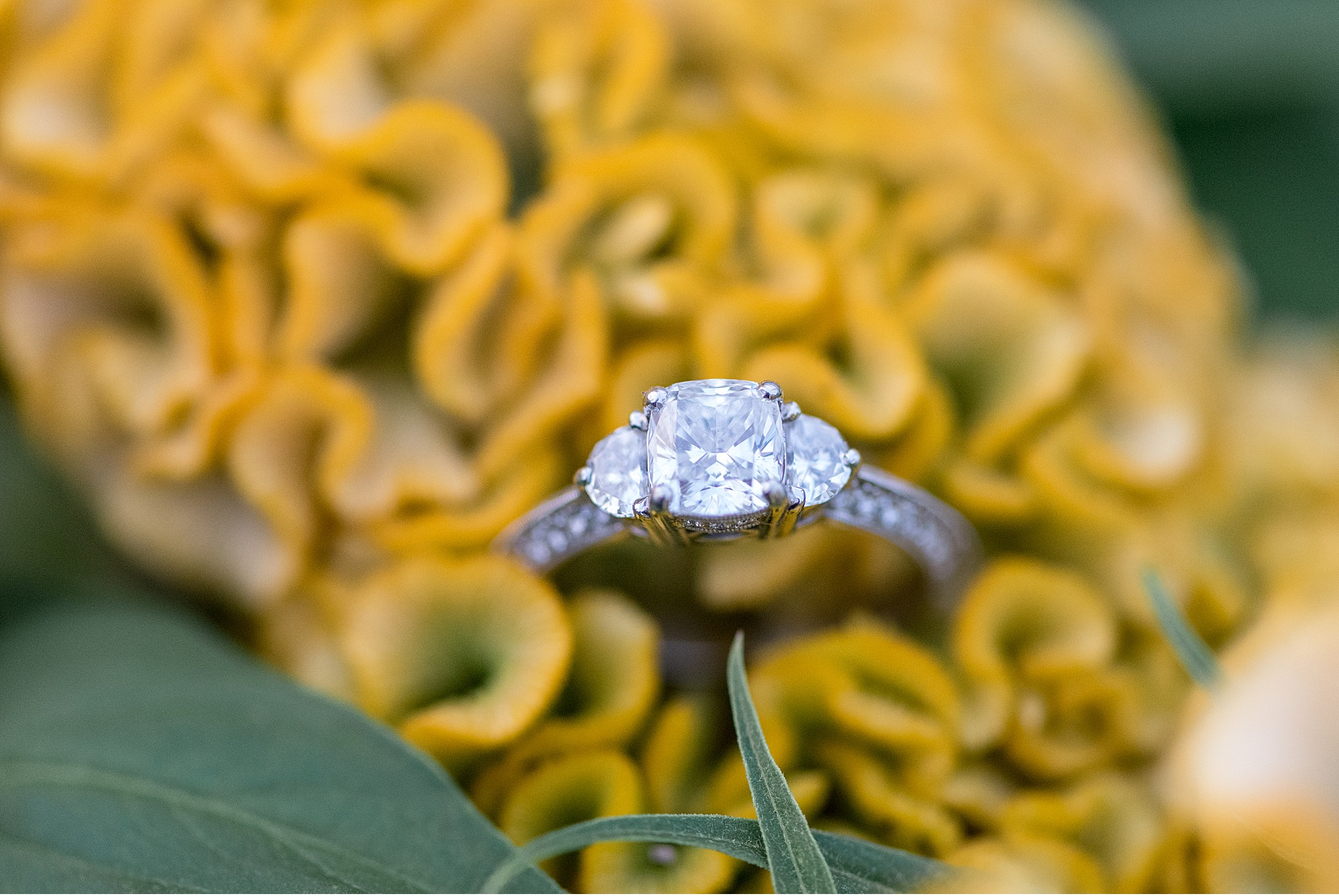 Tudbinks Greenhouse Lancaster PA wedding engagement photography_3975.jpg