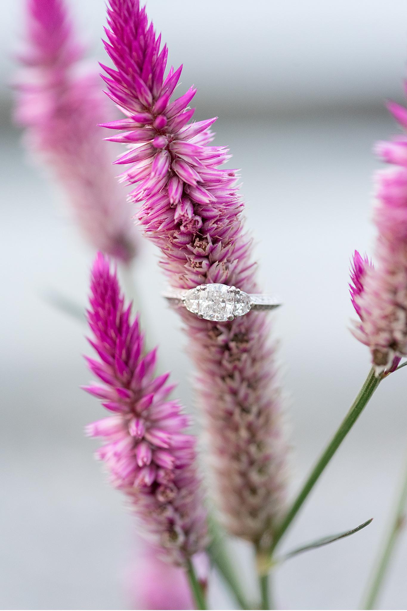Tudbinks Greenhouse Lancaster PA wedding engagement photography_3976.jpg