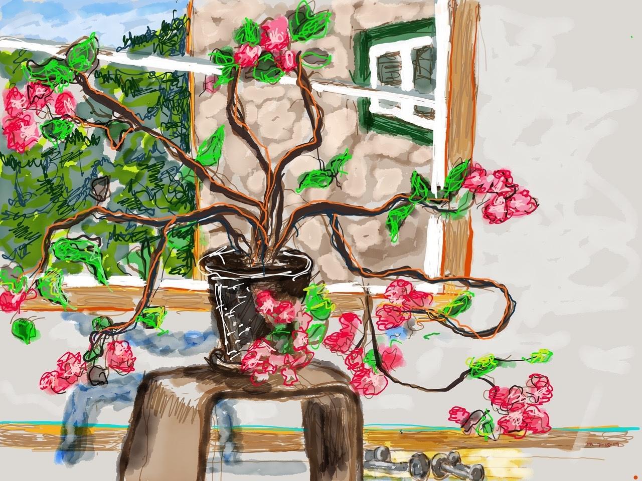 House Plant, Heart Plant