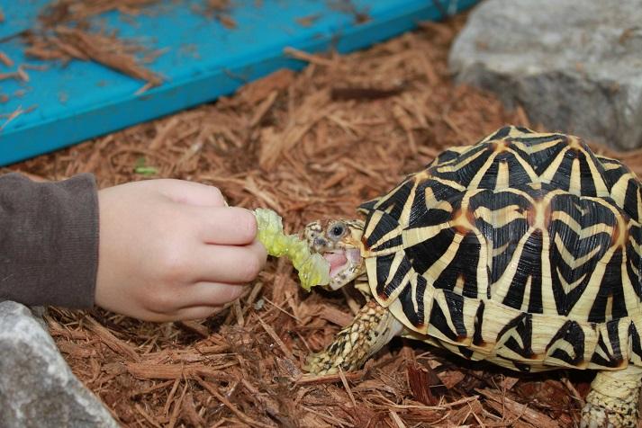 tortoisewhisper1.jpg
