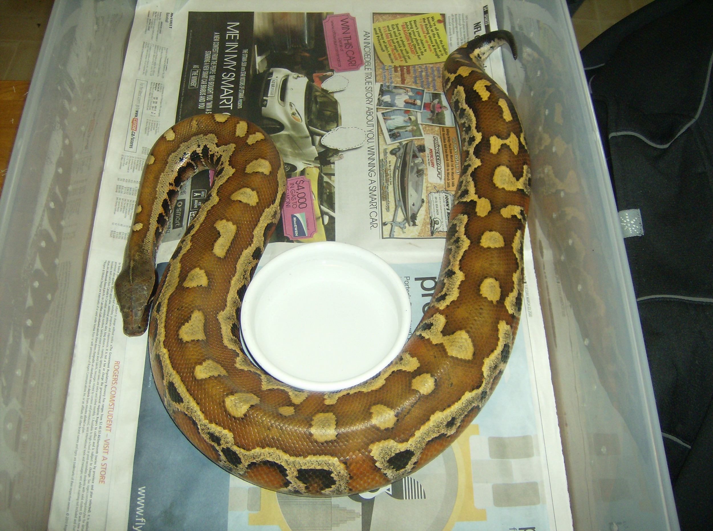 Jers Reptiles 041.jpg