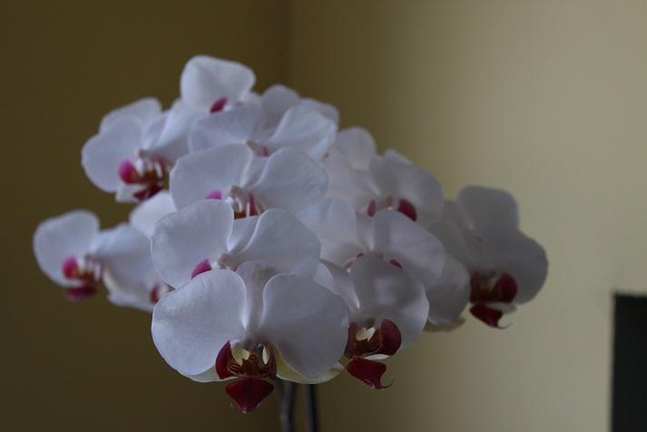 orchid6.jpg