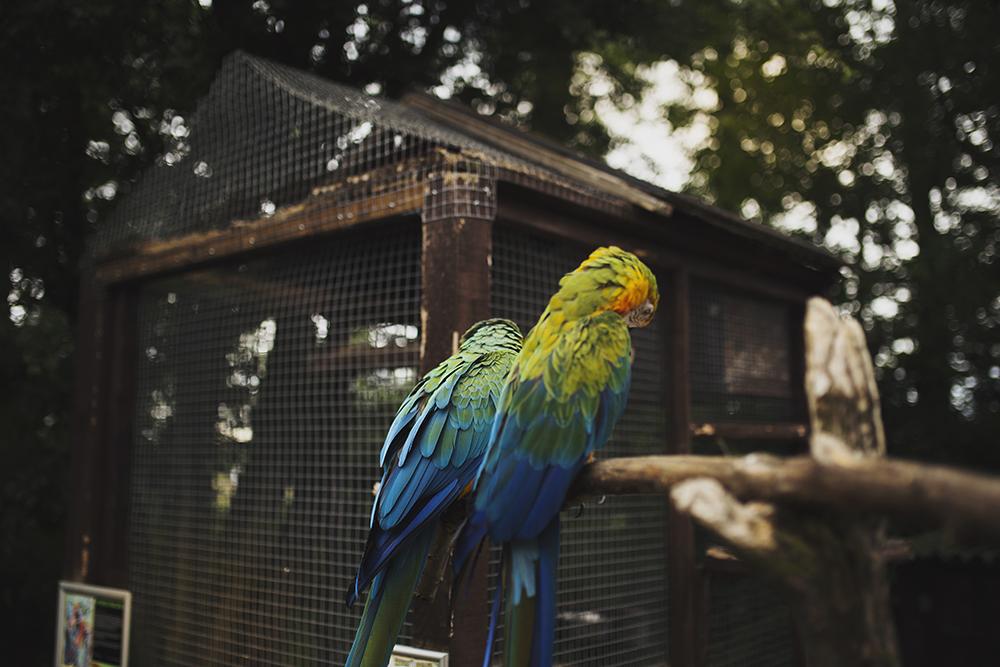 KeownPhoto.Birds-1.JPG