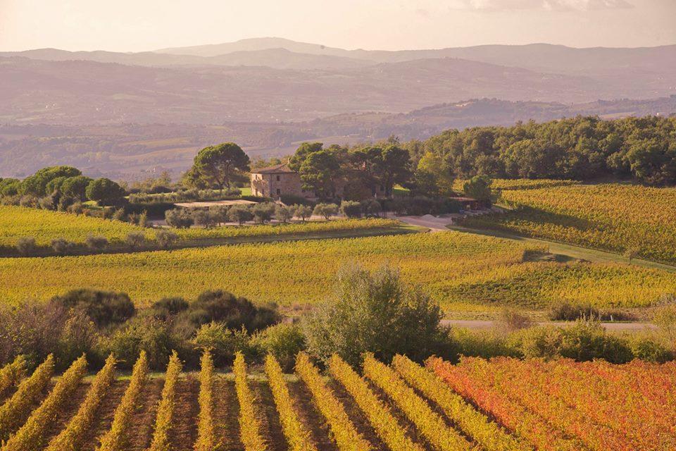 Learn the wine growers' lingo.  In Italian.