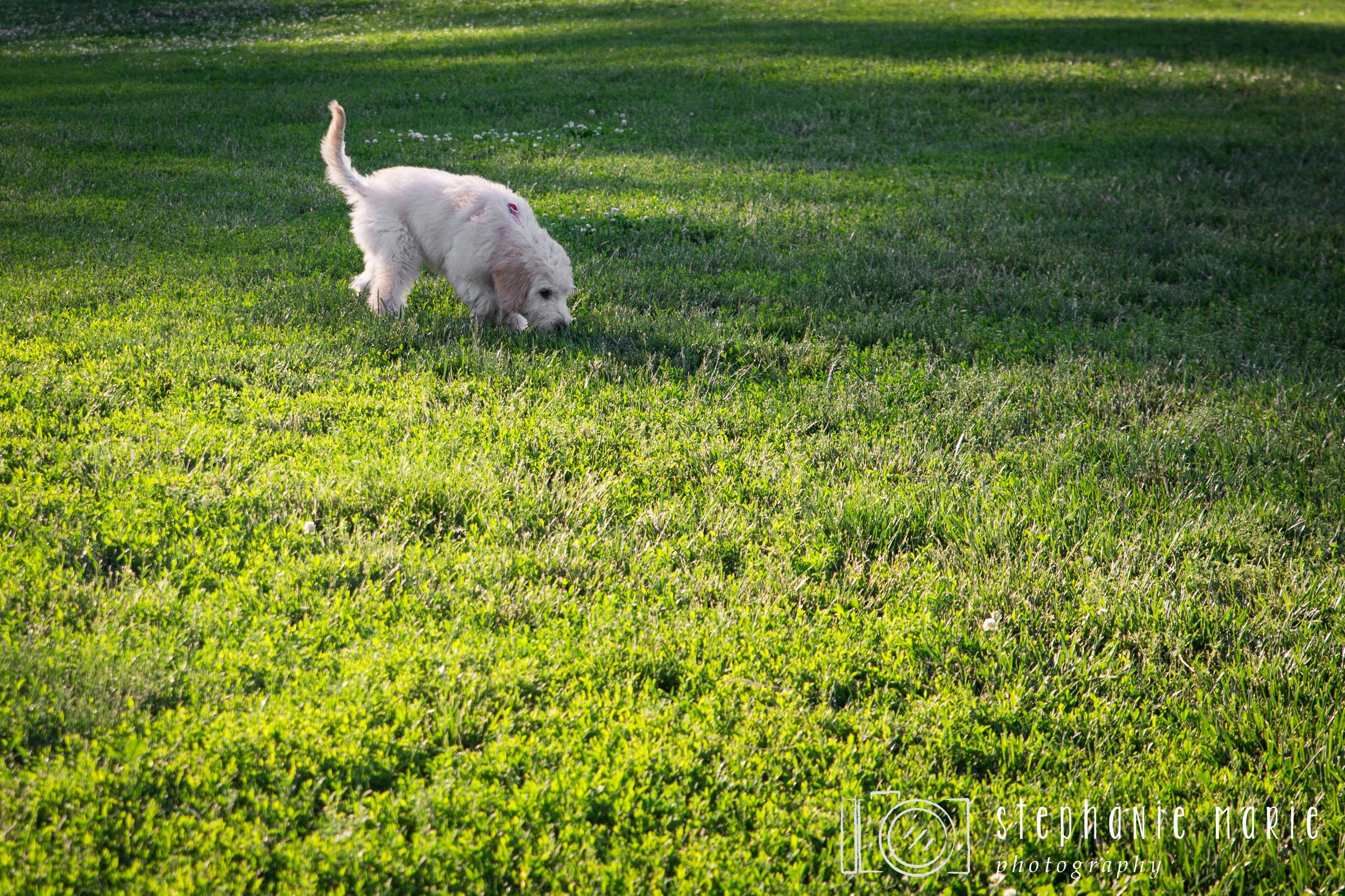 Greater Dayton Area, Oak Grove Dog Park, Dayton Photographer