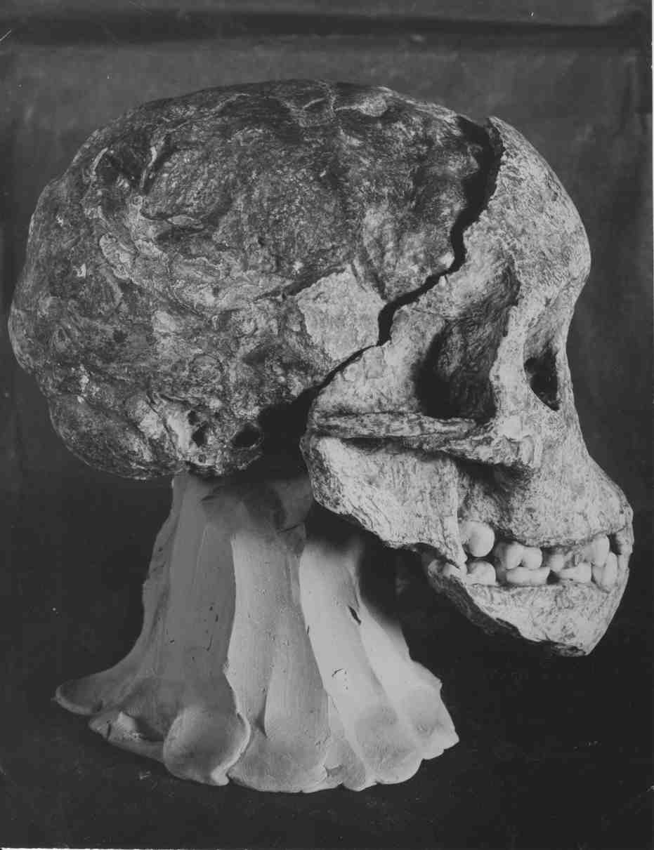 Lateral view of the Taung Child, as photographed in January 1925 for  Nature . Courtesy of the University of Witwatersrand, Raymond Dart Archive.