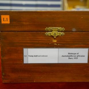 The Taung Child's Box:<br/>A Twentieth-Century Reliquary