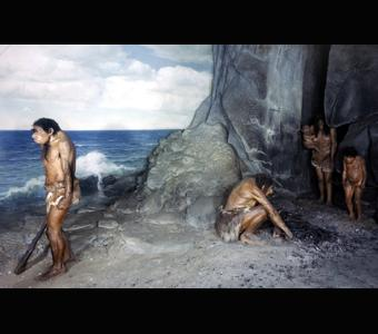 Neanderthal family diorama by Frederick Blaschke.Credit Information: © 1980  The Field Museum  ID# CSA76895_Ac Photographer: Ron Testa