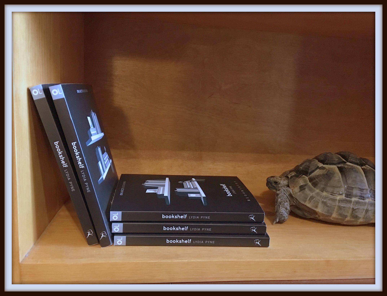 Zeno the tortoise and his ultimate #shellfie.