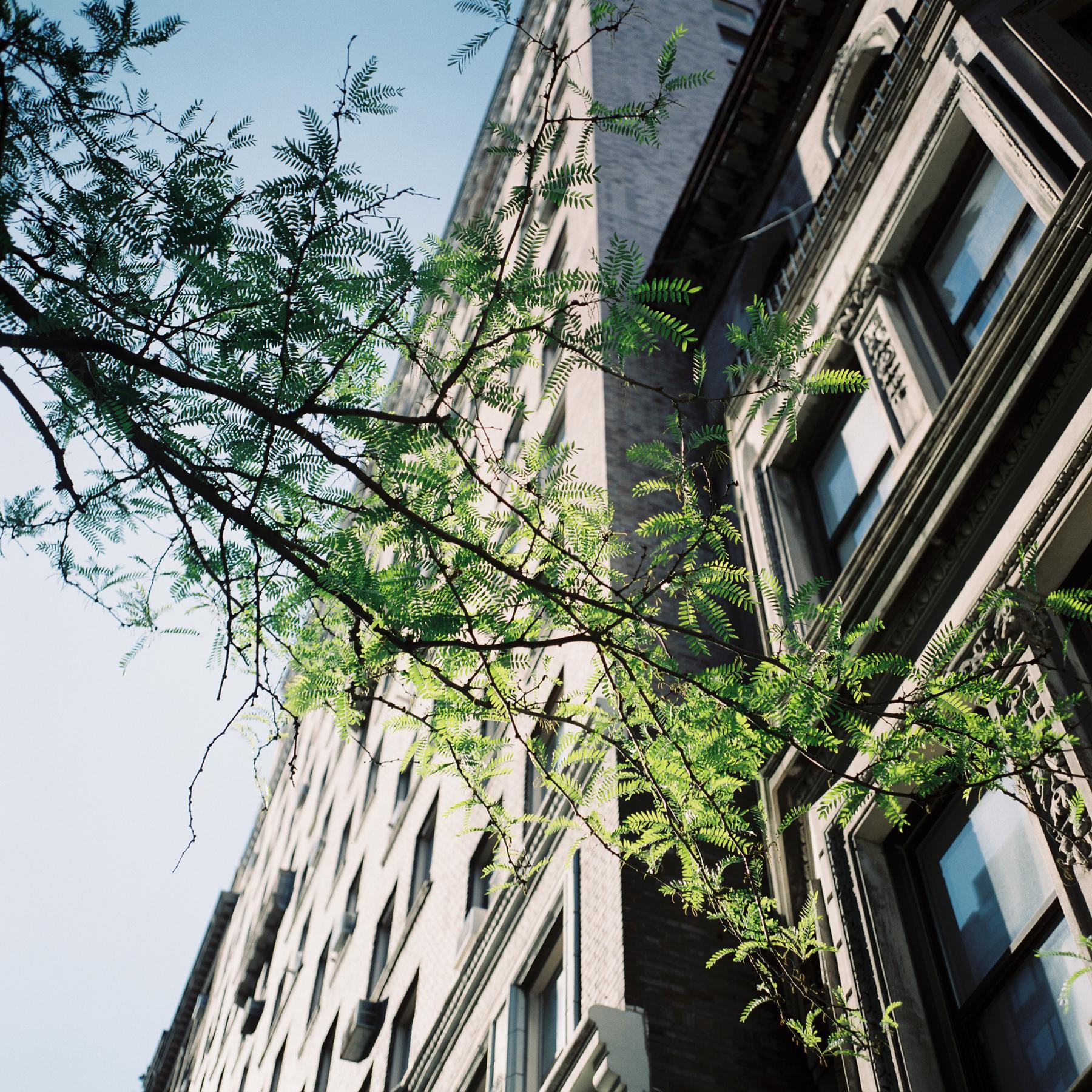 melesemiller_newyorktravel-25.jpg