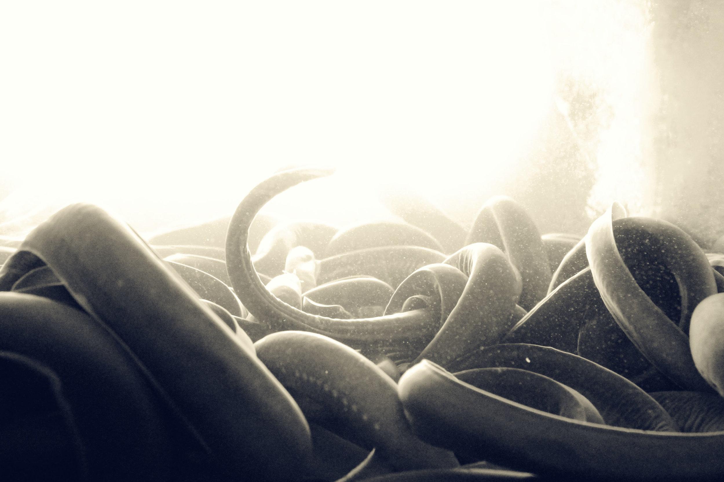 Korean Snakes.jpg