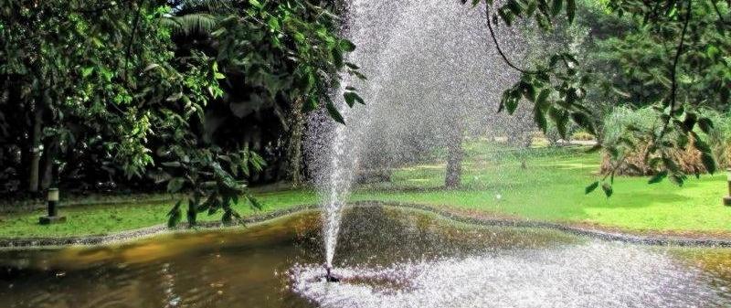 formação: jardim josé do canto — flora e paisagem