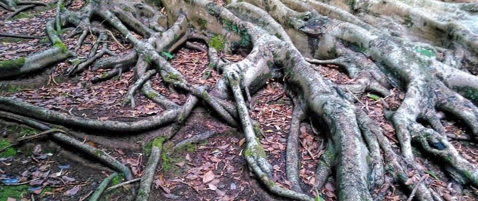 festa da árvore