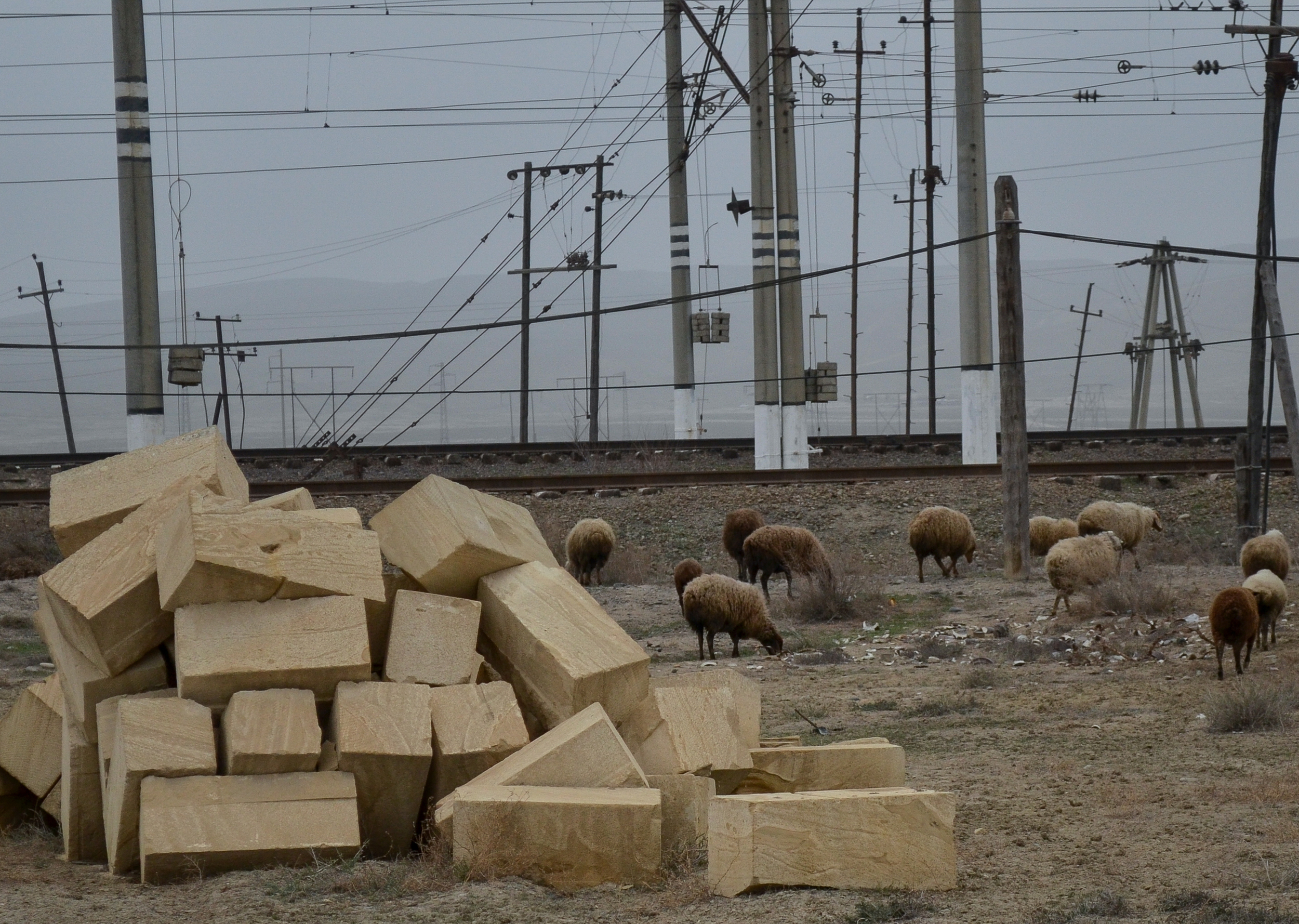Sheep and railroad - my favorite combination.