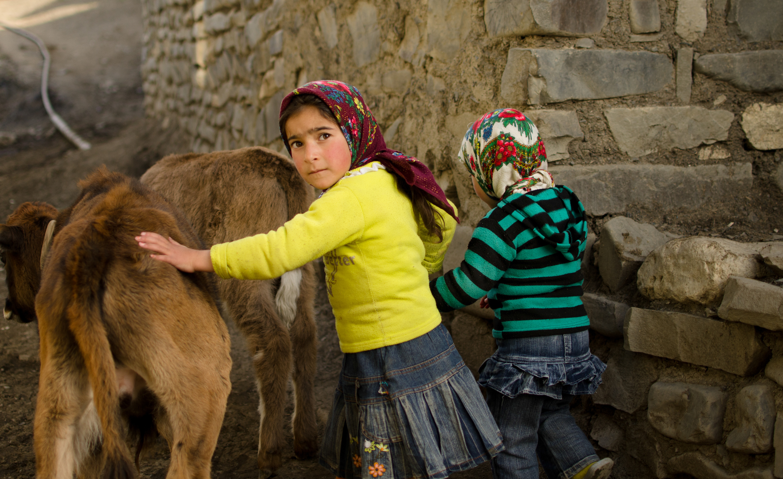 Children in Xinaliq shooing their livestock back from the hills and into their stone barns for the night.